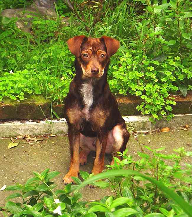 Dog Rescues In Santa Rosa Ca